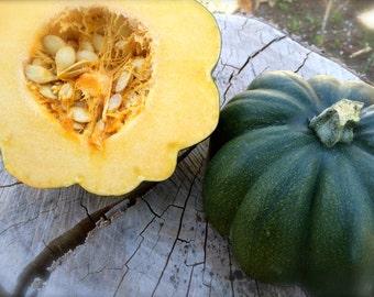 Acorn Squash Sweet REBA  Open Pollinated Bush Type Variety Disease Free Grown to Organic Standards Rare Seed
