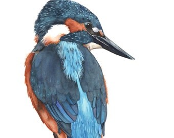 Kingfisher print of watercolor painting K1415 A4 size print wall art print - bird art print