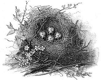 Birds Nest With Eggs  - Digital Image - Vintage Art Illustration - Instant Download