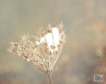 Queen Annes Lace, Winter photography, Dried Wildflower, Nature photography, Flowers in snow, Macro photography, Rustic home décor