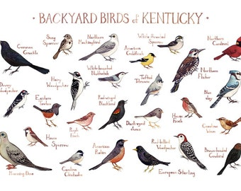 Kentucky Backyard Birds Field Guide Art Print / Watercolor Painting / Wall Art / Nature Print / Bird Poster