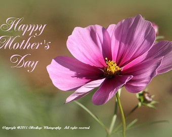 Cosmos - Happy Mother's Day