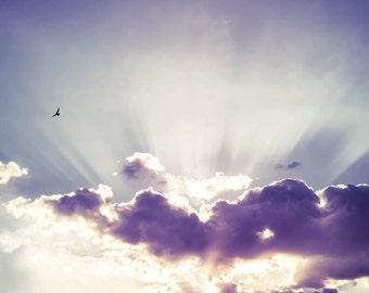 birds photography sunset birds flying wall decor 8x10 24x36 fine art photography nature sky photography clouds lilac cream bird in flight