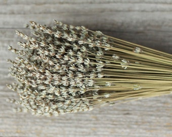 10 Bunches French Dried Lavender