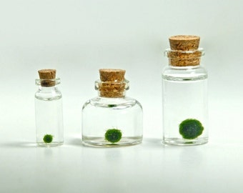 A Family of 3 Assorted Sizes of Miniature Marimo Moss Ball Bottles - Super Mini Bottles, Dollhouse Miniature Bottles, Christmas Gift Ideas