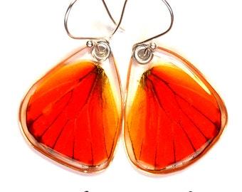 Real Orange Albatross Butterfly (Appias nero) (bottom/hind wings) earrings