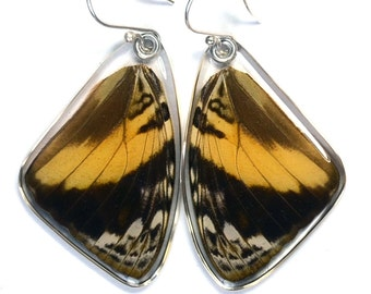 Real Blomfild's Beauty Butterfly (Smyrna blomfildia datis) (top/fore wings) earrings