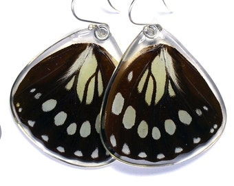 Real Forest Queen Butterfly (Euxanthe eurinome) (bottom/rear wings) earrings