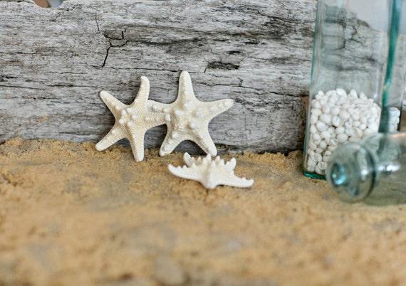 Beach Decor -  Knobby Starfish - Small Natural Starfish