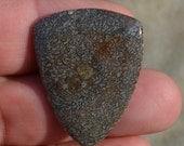 Dinosaur bone Guitar Pick - Large Prehistoric Plectrum D-15-14