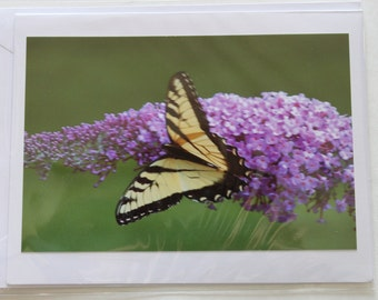 Butterfly Bush witha Yellow Swallow Tail Butterfly Blank Photo Note Card