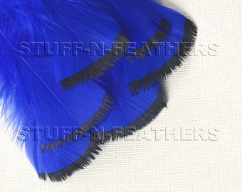 Cobalt blue feathers BLACK DIPPED, hand painted small loose turkey feathers black tips real feather / 3-5in (7.5-12.5cm), 6 pcs / F161-3B