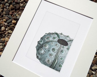 Sea Foam Blue Sea Urchin Archival Print