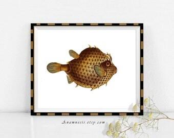 BROWN TROPICAL FISH - digital image download - large antique ocean illustration retooled for image transfer -  prints, totes, tags