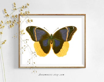 BUTTERFLY BEAUTY - digital download - printable insect illustration retooled by Anamnesis - image transfer - totes, pillows, prints, clothes