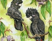 "Bird painting, Red Tailed Black Cockatoo, australian animal, parrot art, watercolour painting, ""The Meeting Place"" fine art print"