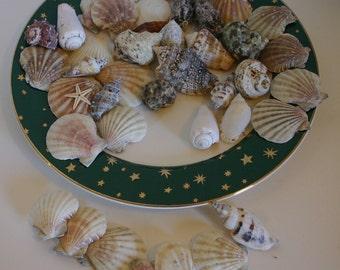 14K Gold Stars Plate Galaxy with Sea Shell Collection Shells Seashore Decor Retro Plate Centerpiece