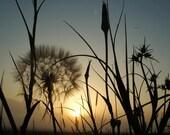 Serene Nature Fine Art Photograph - Pick Your Size