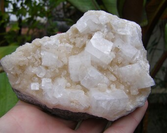 Apophyllite Crystal Cluster- hand collected