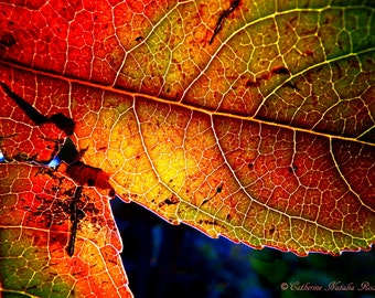 Colors of October by Catherine Natalia Roché, Autumn Evening, Autumn Leaves Photography, Autumn Photography, Fall Leaves Nature Photography,
