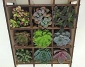 Succulent Plant - Shadow Box Nine Succulent Planter Complete