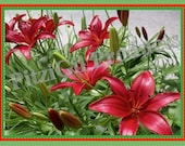 Note Cards:  Red Lilies; photographs by MM