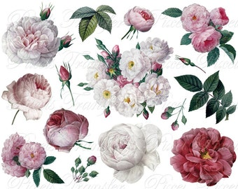 ROSES of Redoute wedding clipart Instant download, digital images, pink red white cabbage rose flower clipart SALE