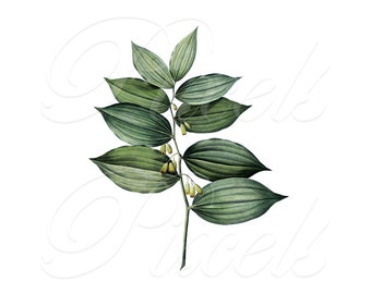 Digital Downloads SOLOMON'S SEAL Large Digital Image, green flower clipart digital download Redoute 125