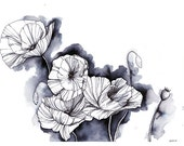 Papaveraceae, Pen and Ink...
