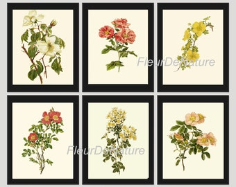 BOTANICAL Print SET of 6 Art Prints 8x10 Willmott Beautiful White Pink Yellow Rose Roses Flowers French Garden Country Antique Home Decor