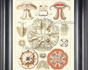 Jellyfish Print Ernst Haeckel 8X10 Art 28 Beautiful Detailed Colored Ivory Coral Jellyfish Sea Ocean Nature Home Room Decoration Picture