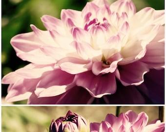 Dreamy Dahlia (Hazy), Floral, Purple, Spring, Fine Art Photography, Wall Decor, SET OF TWO