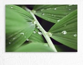 Macro Nature Photography Dreamy Water Droplets on Leaves