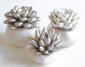 Nickel Set of 3 Succulents in Round Containers, Tabletop, Desktop, Modern, Home and Office Decor