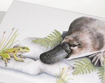 Platypus & Frog - Australian Wildlife art greeting card - waterways conservation river rocks reeds duck-bill unique animals reptile