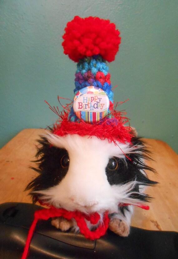 Guinea Pig Birthday Hat Guinea Pig Clothes Bearded Dragon