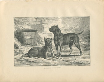 Vero Shaw - Antique Dog Print - Original lithograph  - 1881 Book Of The Dog - English Terrier