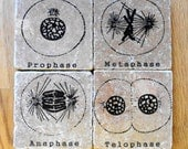 Cool BIOLOGY gift, MITOSIS, GENETICS coasters, set of four