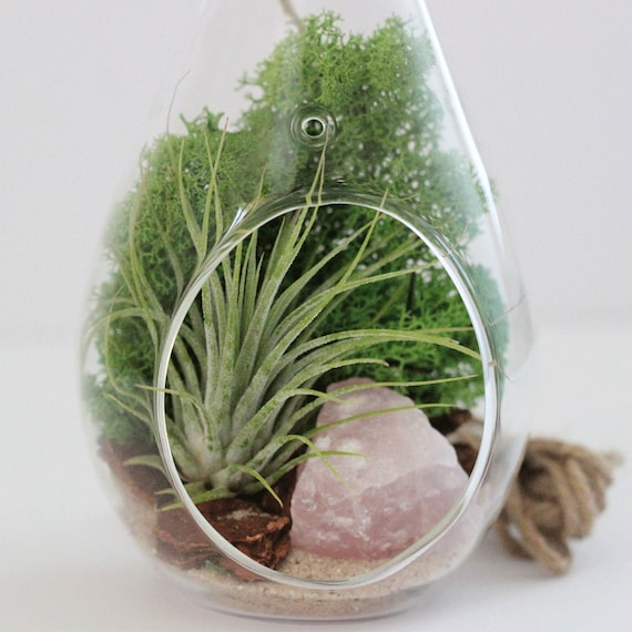 Air Plant and Rose Quartz Air Plant with Green Moss || Teardrop Terrarium Kit