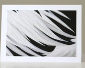 Fine Art Photo Greeting Card, Black and White Feathers, Abstract Print