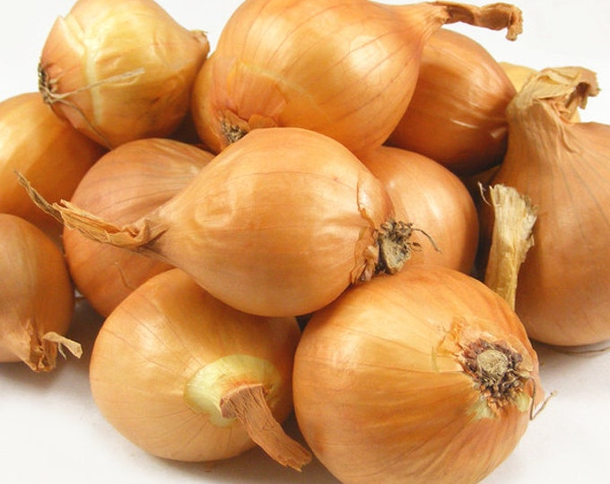 Yellow Shallots 8 Oz. For Planting or Cooking Grown Organic Non-GMO Spring Shipping