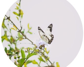 Butterfly Print, Dreamy Wall Art - Pastel, Circle Photo, Fine Art Photography, Cottage Chic Décor, Nature, Minimalist Art  - 8x8/8x12/12x12