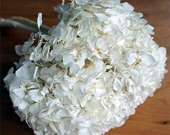 Preserved Hydrangea Stems,  Preserved  Hydrangeas, Preserved Antique White Hydrangeas