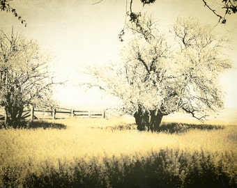 Landscape Photography, rustic, amber landscape, trees, fence row, amber, black, dreamy, fantasy, Home Decor, Fine Art Print