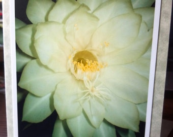Photo greeting card, Blank card, Any occasion, Night Blooming Cereus