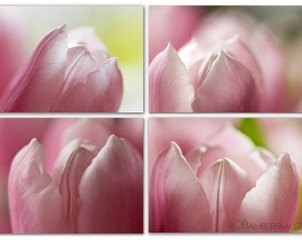 "Pink Tulip Photo Series,  Flower Photography, Shabby Chic, 4 prints - 5"" x 7"", Wall Art, SET OF 4 Tulips prints, Fine Art Photography Prints"
