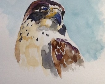 """original Watercolour painting, """"Peregrine Falcon"""", free shipping in North America and UK!"""