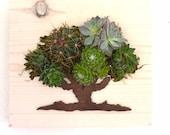 CUSTOM COLOR: Oak Tree Succulent + Cacti Vertical Garden | Vertical Planter | Living Wall | Wall Planter | Hanging Planter | Wood Pla