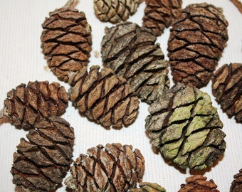 17 Sequoia cones, craft , home decoration, country cottage  Rustic  Pine Cone Craft Woodland Cabin Decor Wedding