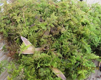 Free Shipping! Fern Moss For Terrariums, Gardens, Vivariums, And More